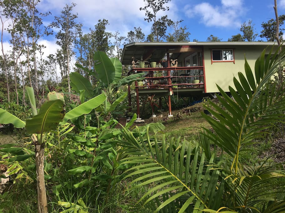 A home away from home. Enjoy your morning coffee or tea and your breakfast in nature on this cozy lanai (porch) surrounded with tropical garden.