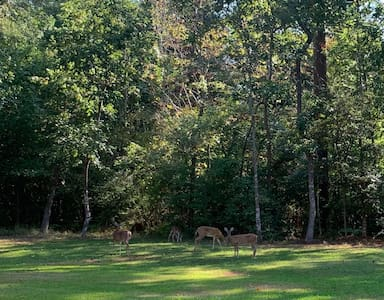 Forest Lane Guest Quarters