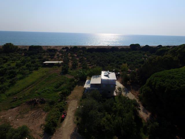 Ktima Bilioni 1 near Olympia