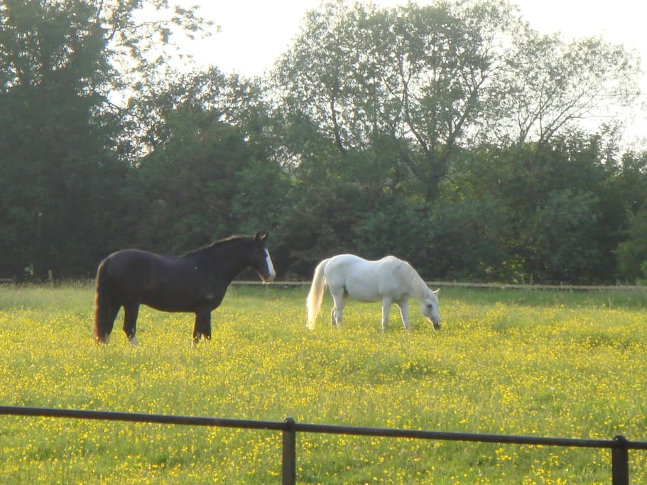 horses on site