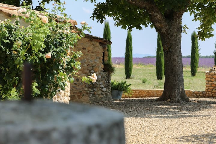 Mas agréable : Les vignes - Puimoisson - Apartemen