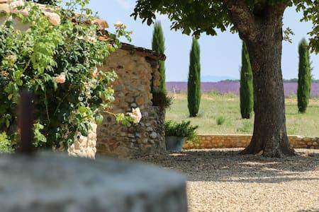 Mas agréable : Les vignes - Puimoisson