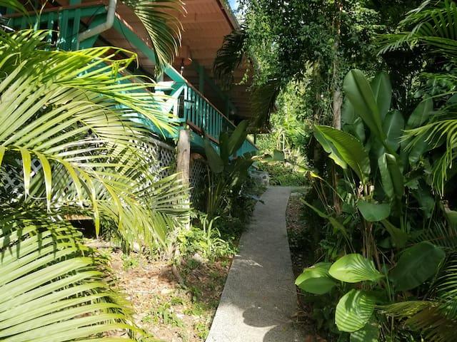 Comfort in the Jungle