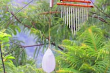 Chimes like this can be heard throughout the day. These two, a water chime and bell-tree chime, hang in Stephen's garden, next to the homestay.
