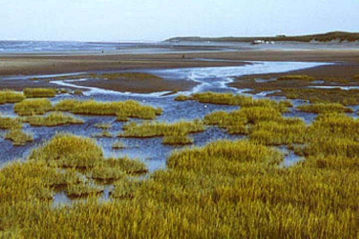 Het ZWIN Nature Reserve in immediate vicinity (<1km walking distance)