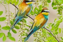 bee-eaters fly around Devin natural reserve. small hill with walking paths