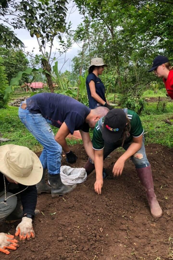 Voluntarios sembrando tubérculos