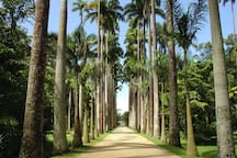 Jardim Botanico 15 minutos by uber