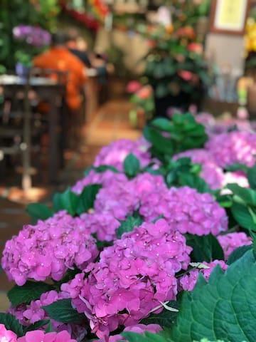 2min walk - Ferringhi coffee Garden