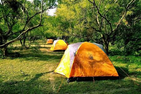 Camping At Birds & Words