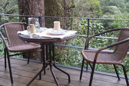 Small Cabin in the Woods - Coatepec - Chalet