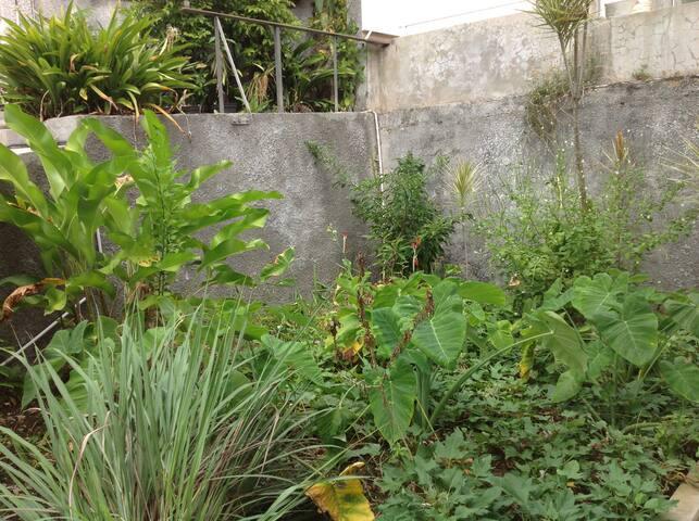 Petit jardin créole