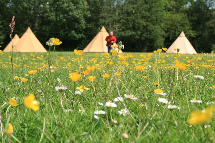 Tents in the flowers
