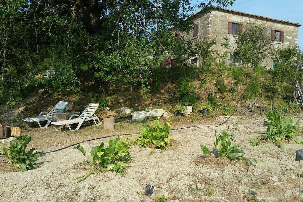 A pochi passi da casa la zona relax lettura, l'orto, il nuovo impianto di rafano (Armoraca rusticana) con cui cuciniamo squisite pietanze