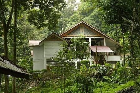 Leuser Guesthouse Ketambe