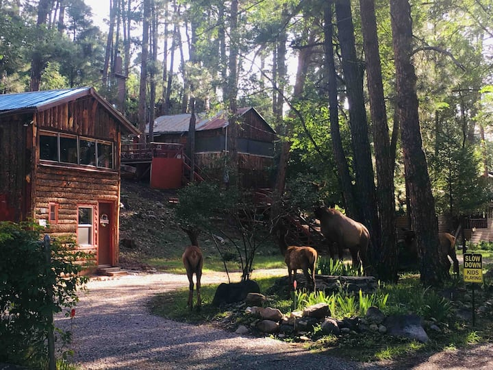 Hootie's Cabin in the Pines.