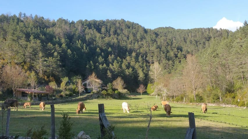 Pyrenean eco holiday cabin, mountain retreat.