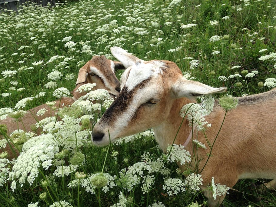 Joey and Edger in fields of Queen Ann's Lace