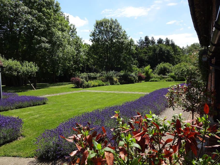 Lavender Garden in full bloom.