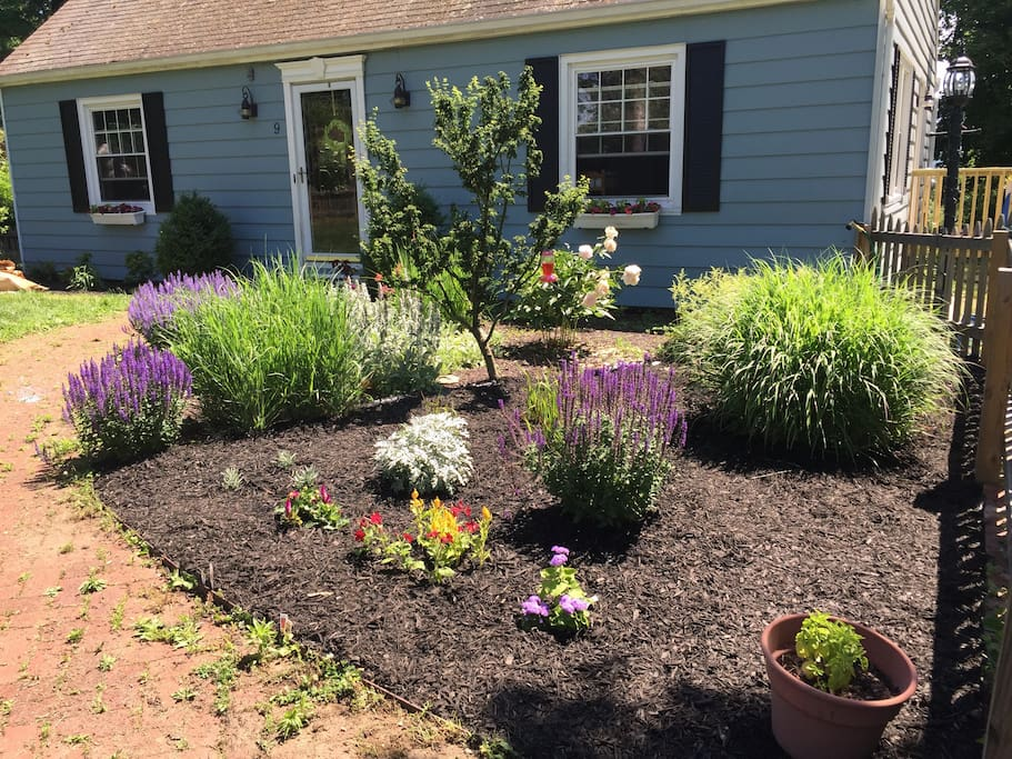 Beautiful flowers and perennials in the front garden.