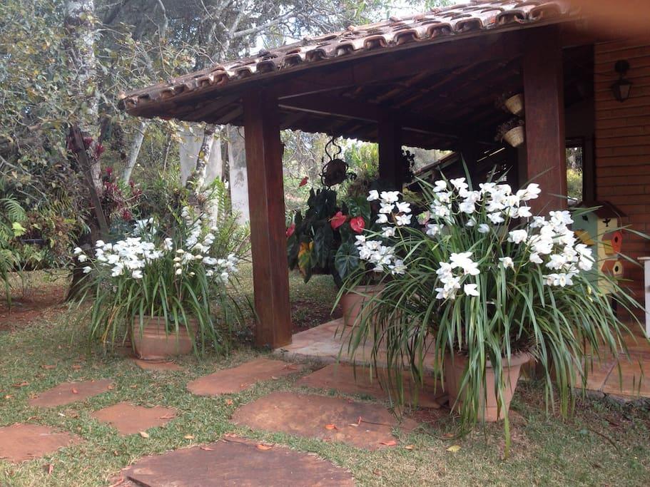 Orquideas Orchids