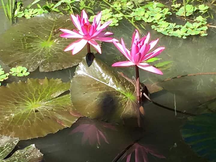 Jardin Du Mekong Homestay - Twin 06 (Full package)