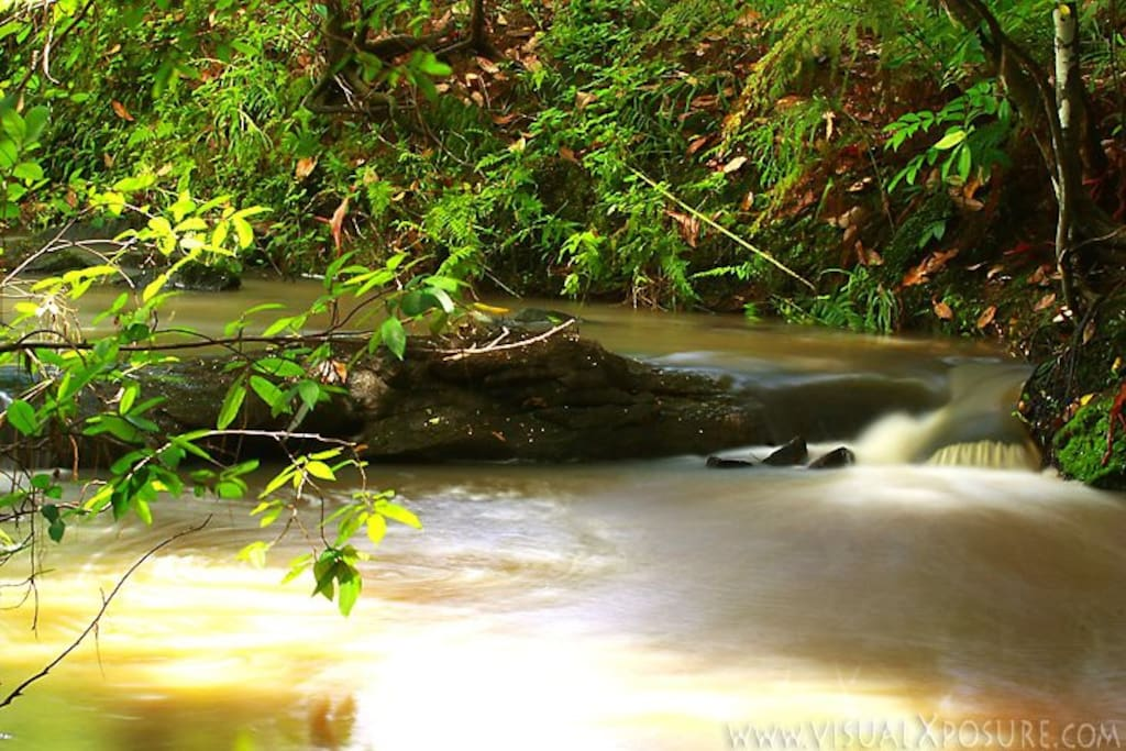 The creek..where tranquility meets the lush Northern NSW rainforest….and it's all yours.
