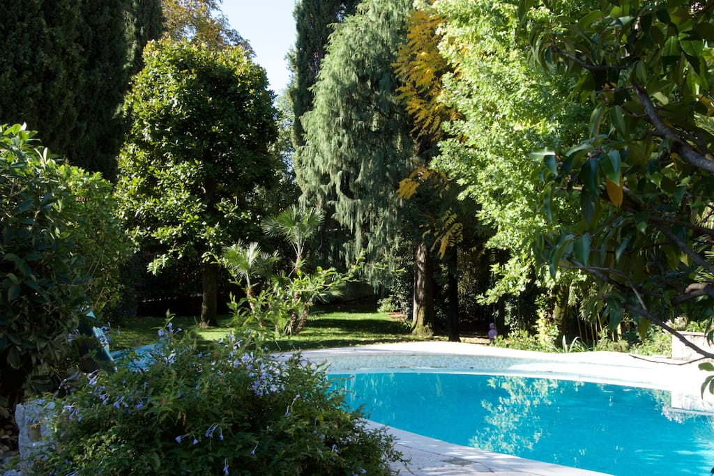 The swimming pool facing the garden