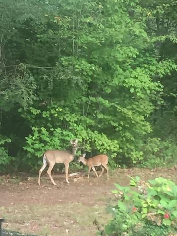 Mamma and baby Bambi.
