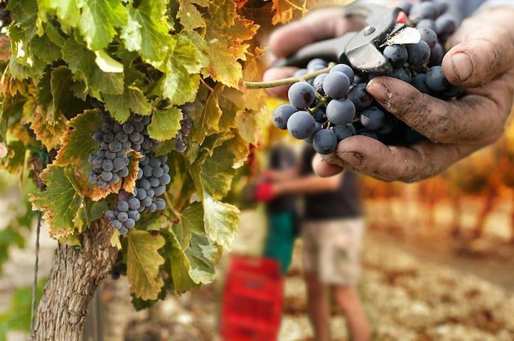 Toscana Etrusca ~ Strada del Vino e dell'Olio - Pastina - Lägenhet