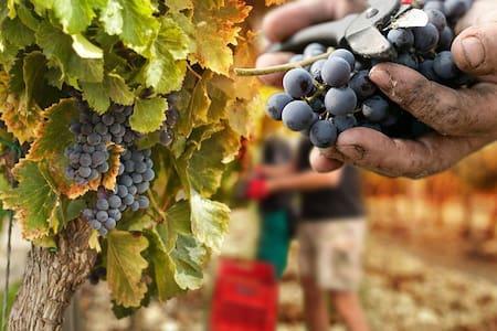 Toscana Etrusca ~ Strada del Vino e dell'Olio - Pastina - Apartamento