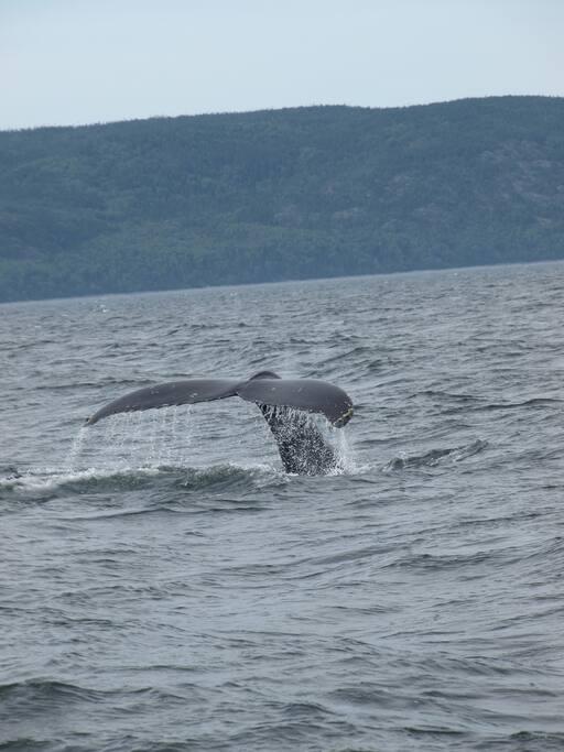 après le petit dej. ou en fin de journée, vraiment le meilleur moment pour aller voir les baleines. Essayer de les voir gratuitement avec les conseils de Jean Claude