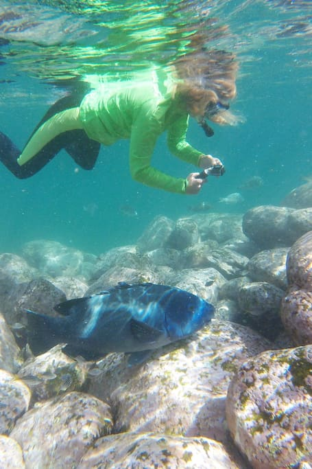 Manly Snorkel Tour with City Pick Up