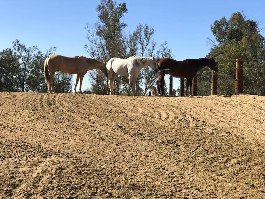 Our working horse ranch has beautiful views from every angle.
