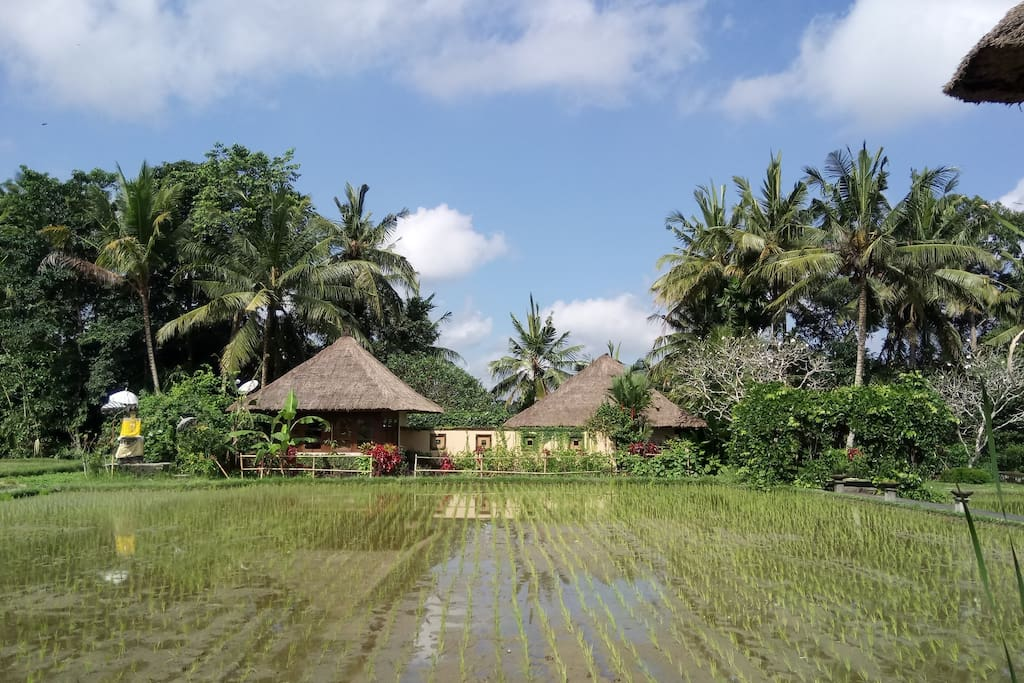 The peaceful Villa Vajra surrounded by rice fields