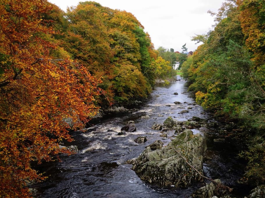 Autumnal colours beside nearby river Feugh