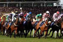 The Cheltenham Gold Cup is the number 1 National hunt horse race at Cheltenham Race Course.