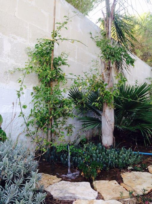 Giardino esterno.