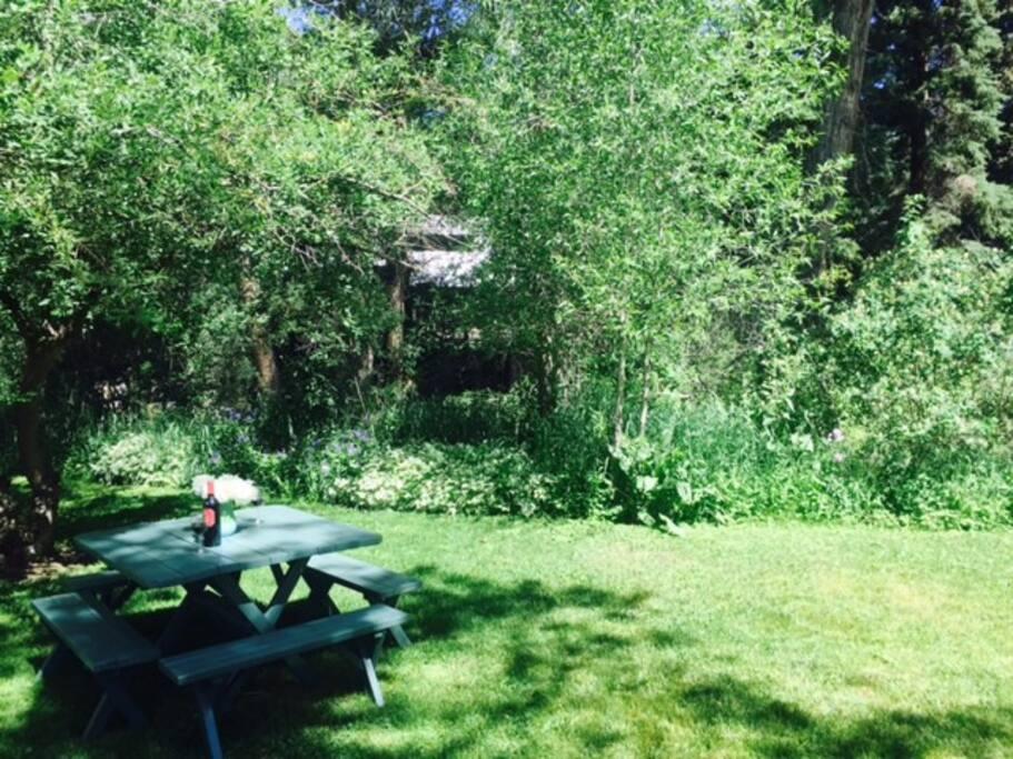 Back yard picnic table