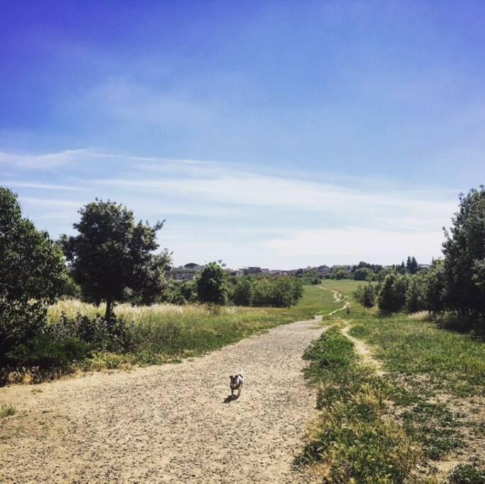 Parco del Pineto a 5 min