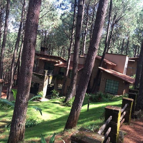 FOTO 4; La Casa Cabaña internada en el corazón del bosque.
