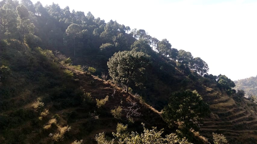 Sunny,Family- friendly,Peaceful - Kasauli