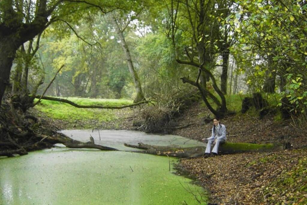 Lagunas en el entorno de la casa, dentro del bosque de Fervenza, al pie del río Miño