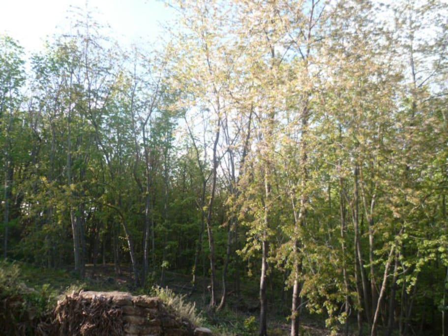 Vue depuis le séjour  et  la terrasse (au printemps)