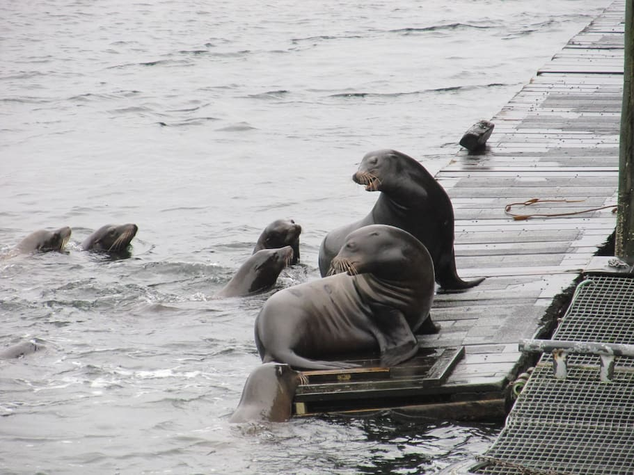 Minutes to the Sealions