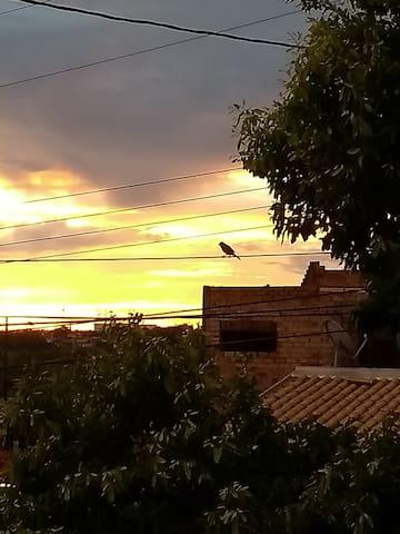 Olha o passarinho....rs