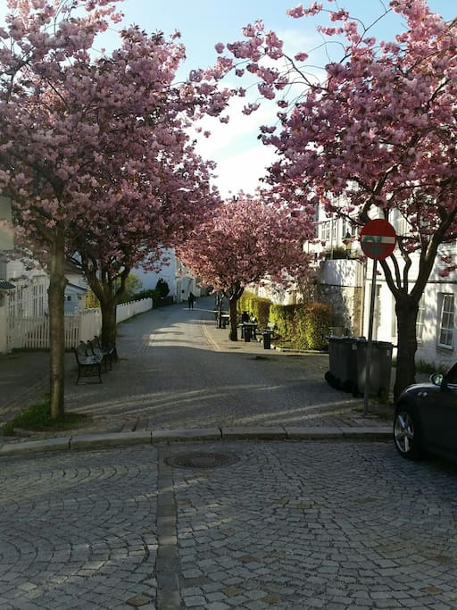 The street in the spring