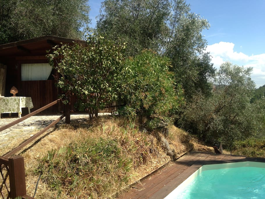 Chalet shaded by olive trees next to swimming pool