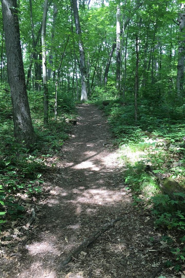 Brighton Recreation Area Trail