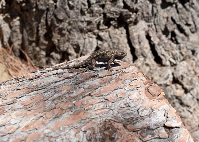 Lizard watching